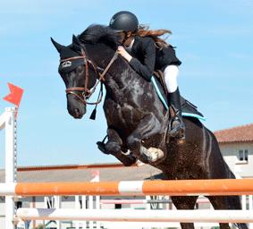equitation-bmsl